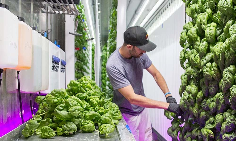 Square Roots is a vertical farming accelerator with a campus of climate-controlled farms in shipping containers. Photo courtesy Square Roots